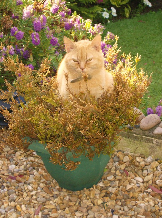 My cat sitting in a bush.Do you think he'll grow if I water him?