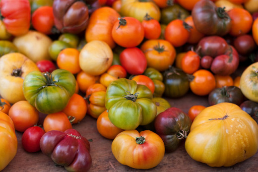 Open pollinated tomatoes come in all kinds of shapes and colors
