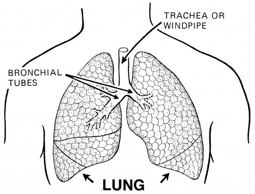 Breathing exercises help in maintaining the health of the lungs.