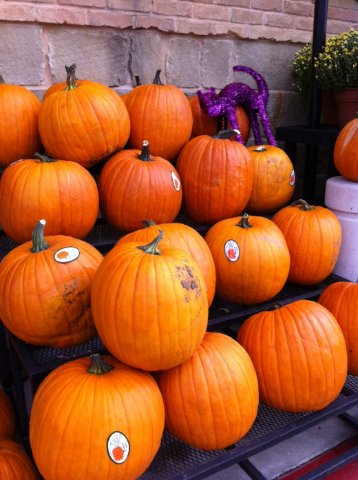 Pumpkin harvests abound in the fall, but you can enjoy these tasty and healthy dishes all year.