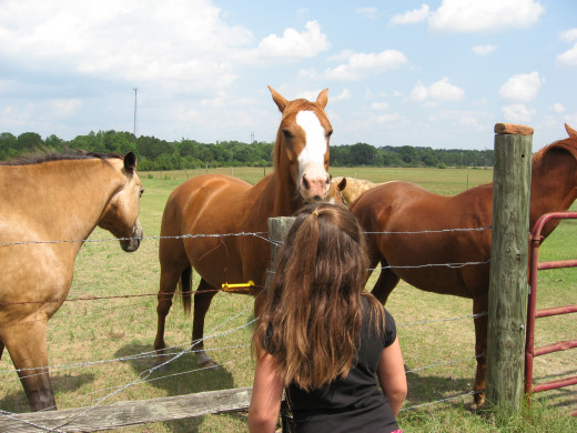Horses crave the company of other equines.