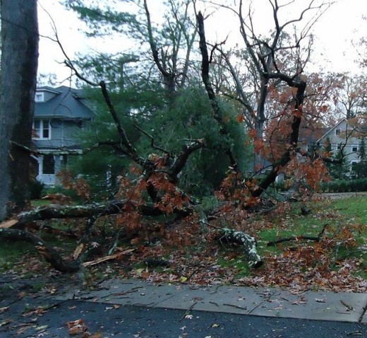 Uprooted tree in Summit, NJ after Hurricane Sandy