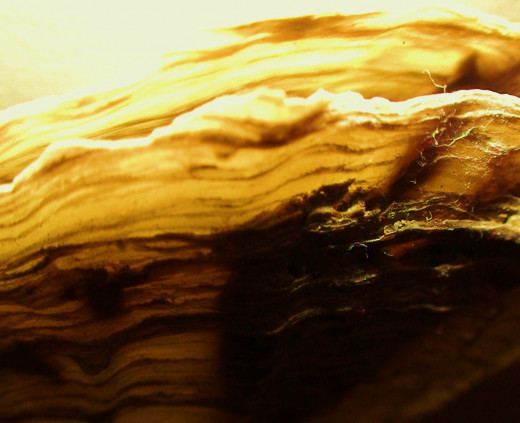Shells provide wonderful colors and textures for clos-up photography.