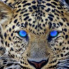 Terishere profile image