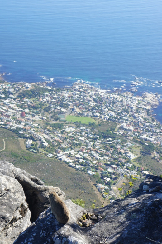 A Dashies eye view of Camps Bay