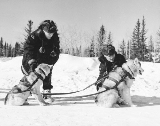 Sled dogs come in all sizes and shapes and have been used for centuries for various kinds of mushing.