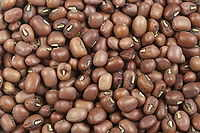 The mung bean