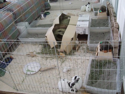 Rabbit''s cage should have enough space to let them freely move when they're inside.