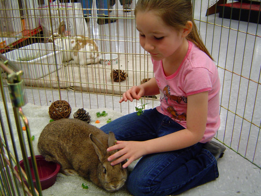 Allow your children to spend sometime with your bunny since children are far better communicative than adults in case of keeping pets.