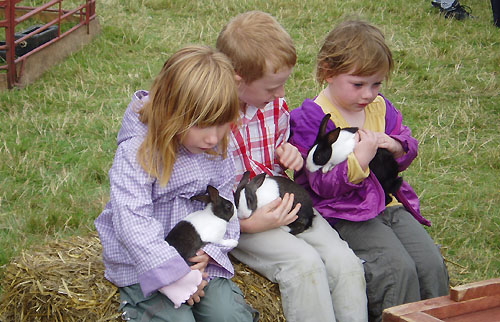 rabbits are the members of your family and make them feel as such