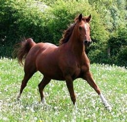 Dobbin Our Favourite Pony for young children