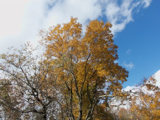 The trees have such pretty colors in the fall in come places, and the sky can be so blue.