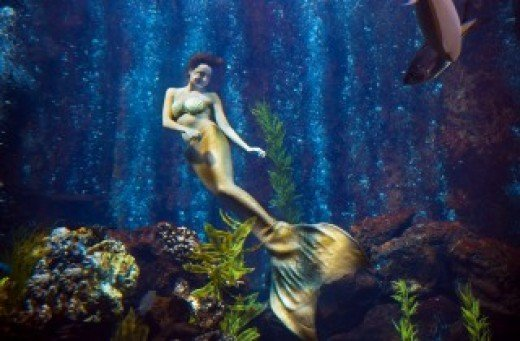 Mermaids entertain guests during lunch and dinner at the Oceanarium.