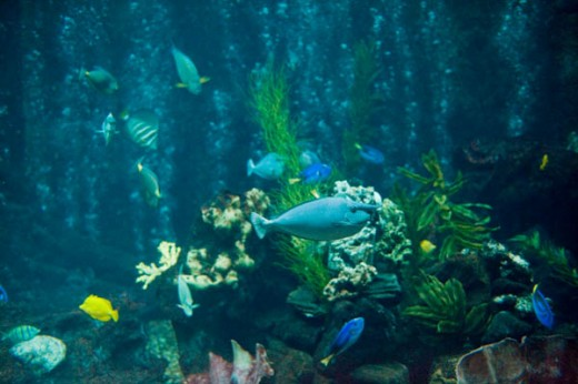 Some of the beautiful sealife in the aquarium