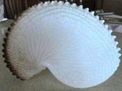 The Paper Nautilus