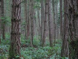 San Juan, Wa forest