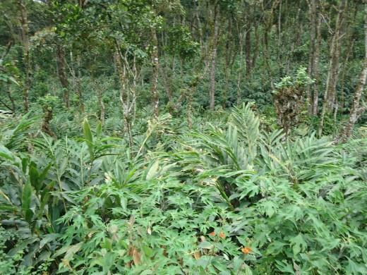 A deep plantation