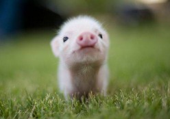 What baby animals always make you go aww?