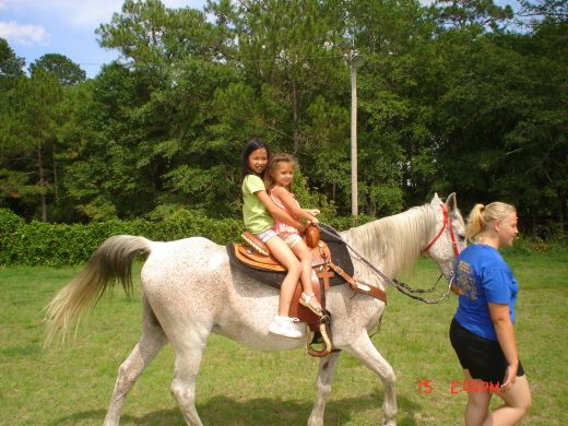 Horse Riding Lessons should begin on a safe, calm, gentle mount.