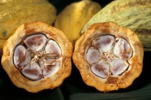 Closer look at cacao pod and its seeds.