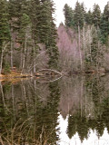 Easy Hiking at Isobel Lake Forest Ecosystem