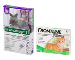 Advantage II vs Frontline Plus - Which Is The Best Cat Flea Treatment?