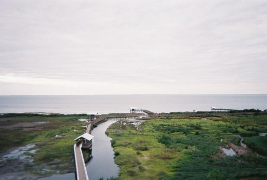 South Padre Island Birding Center:  View from the 3rd floor balcony.