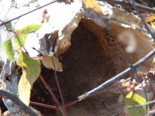 Nesting Cavity