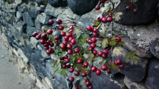 Berries 808