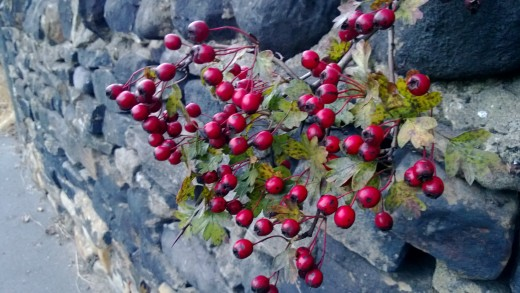Berries 920