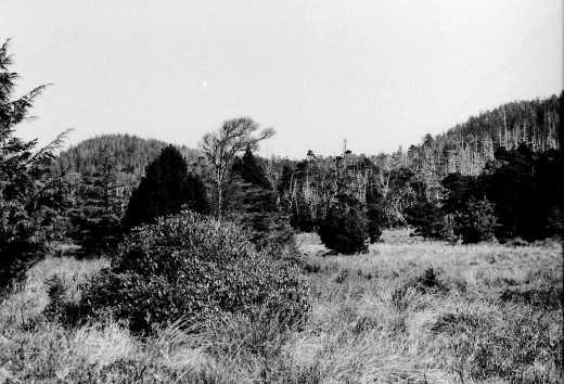 Pine Meadow -  Cape Scott Trail circa 1974