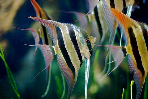 keep your new fish healthy by acclimating them well