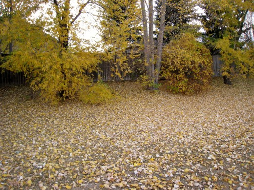 Golden leaf litter