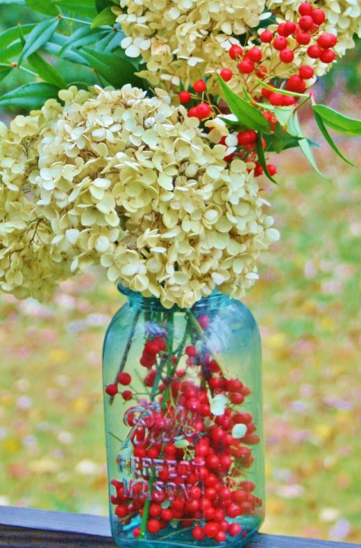 Nandina berries add holiday color to  dried hydrangea.