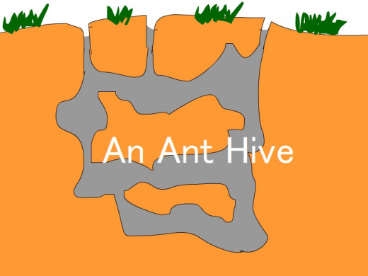 Structure of a Carpenter Ant Hive