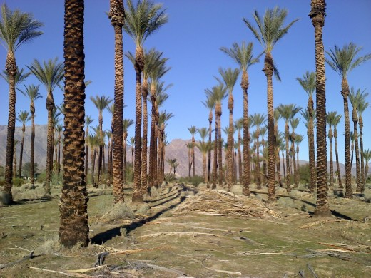 Palms are very biblical and symbolic, but they violate a lot of rules. They work on the Sabbath.