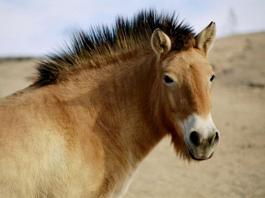 A horse that can't be tamed under any circumstances.