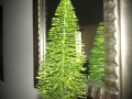 Decorate Your Home with Mini-Christmas Trees