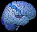 Brainwave Entrainment a Scam?