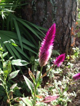 The vivid purple of this flower really comes out in the sunshine.  This was on the edge of the Butterfly Garden area.
