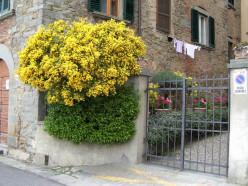 A Villa in Tuscany - Part 2 of a series - Cortona