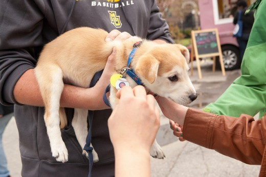 Some back-yard-breeders will try to sell puppies cheaply in parking lots.