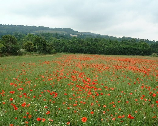 Poppy Field. A view from Filston Lane towards the Darent Valley and the downs beyond