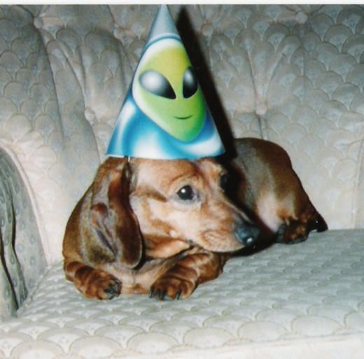 Dog With Birthday Hat - Aids Health.