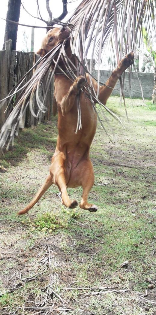 A happy dog really will jump for joy.