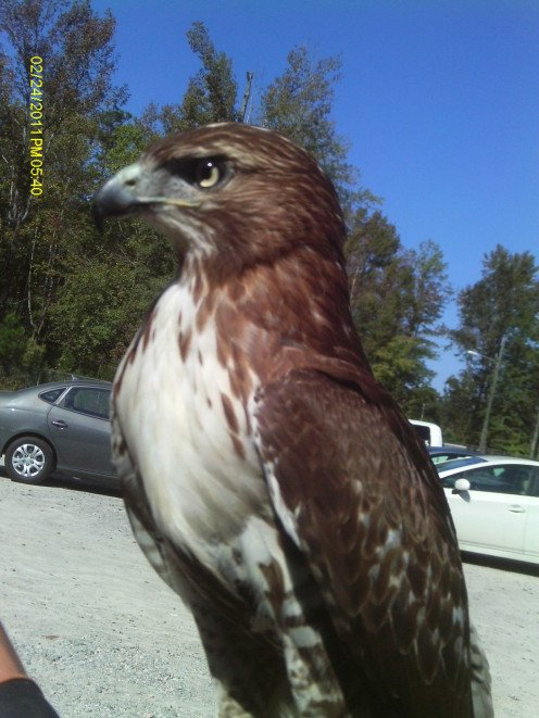 A beautiful profile of a regal bird.