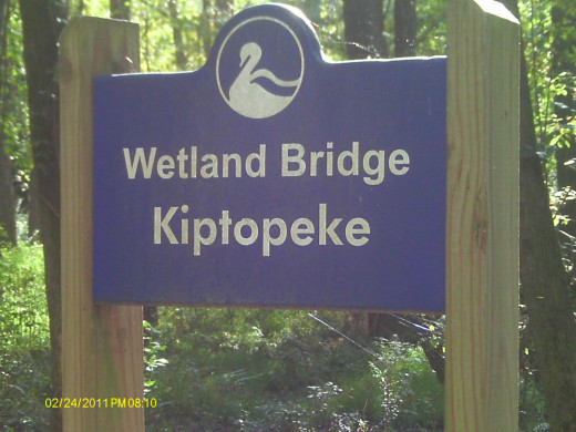 A bridge overlooking the wetlands