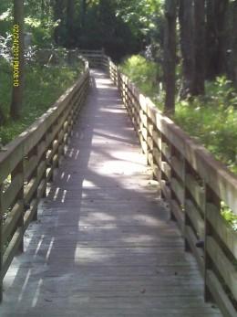 The Wetland Bridge