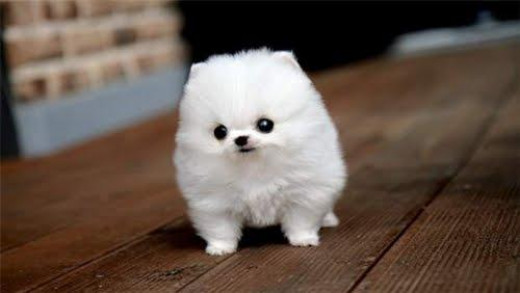 Cotton Ball