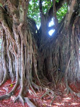 Tree Day